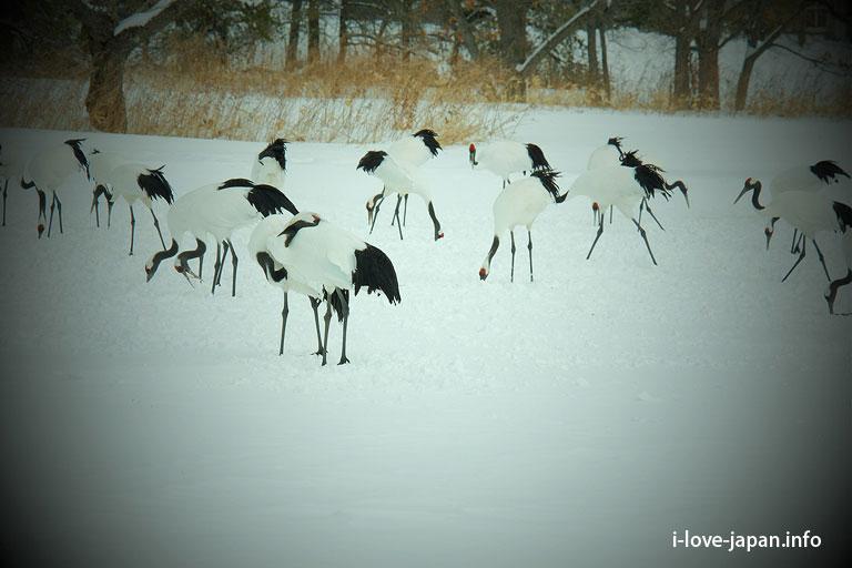 Tsurumidai(Observatory of crane)Hokkaido