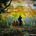 Shinjuku Gyoen in Autumn( shinjuku-ku,Tokyo)