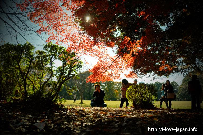 新宿御苑(新宿区)|【地図付き】東京都内の紅葉スポット。おすすめの名所も穴場もライトアップも。