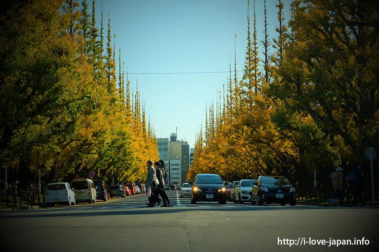 Gingko lined street at Meijijingu Ganen(Shinjuku-ku,Tokyo)