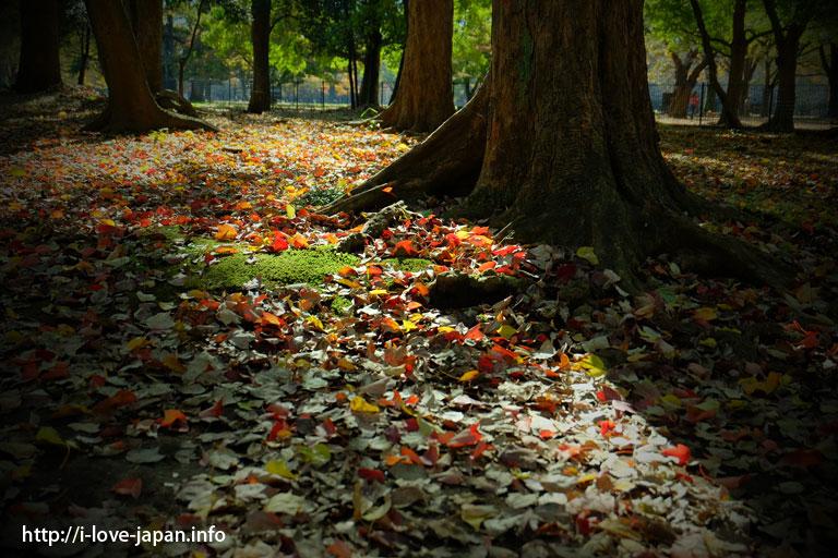 代々木公園(渋谷区)|【地図付き】東京都内の紅葉スポット。おすすめの名所も穴場もライトアップも。