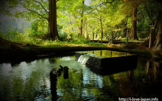Shakujii Park(Nerima-ku,Tokyo)