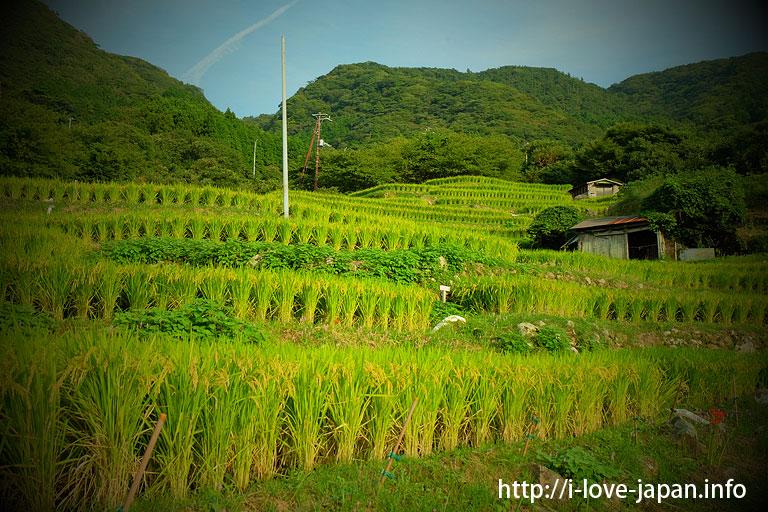 Ishibu Rice Terraces