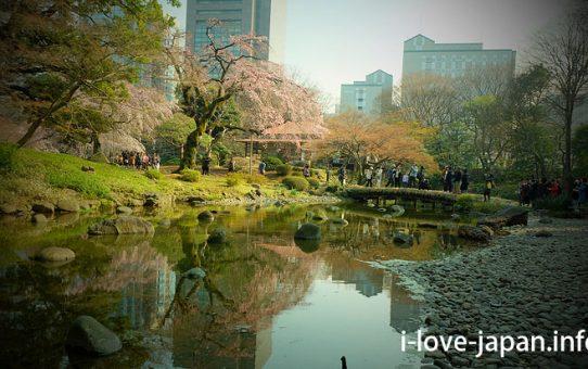 Koishikawa Korakuen Garden Cherry Blossom,Sakura(Bunkyo-ku, Tokyo)