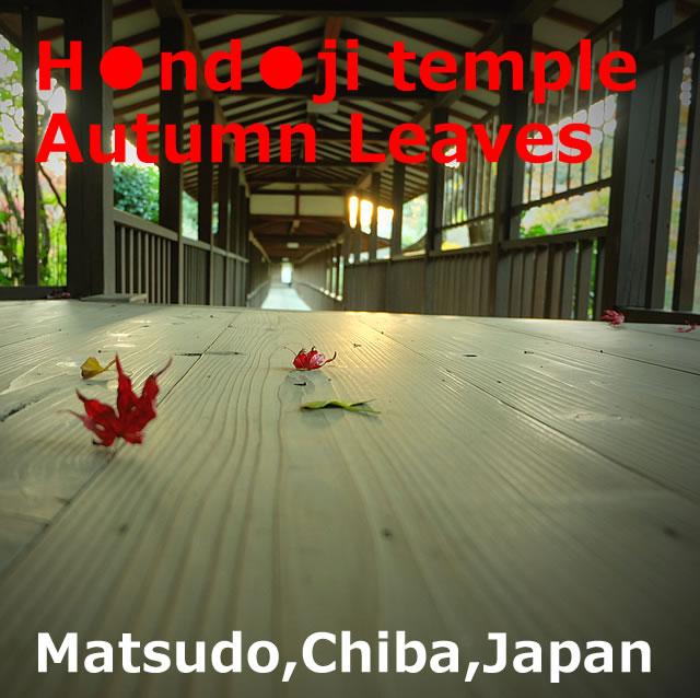 Hondoji temple Autumn Leaves(Matsudo,Chiba)