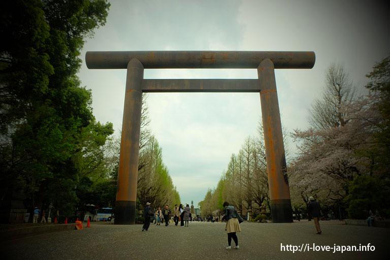 Yasukuni Shrine and Chidorigafuchi Cheery Blossom Sakura(Chiyoda-ku,Tokyo)