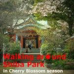 Walking aroung Shiba Park in Cherry Blossom season(Minato-ku,Tokyo)