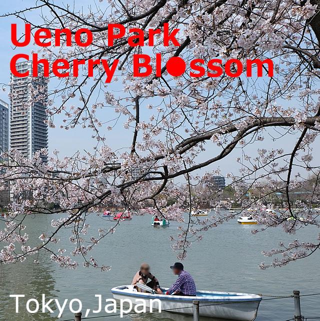 Ueno Park Cherry Blossom Spot (Sakura)