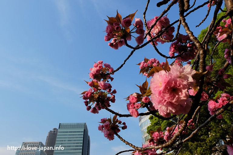 Kyu-Shiba-rikyu Gardens (Minato-ku,Tokyo)