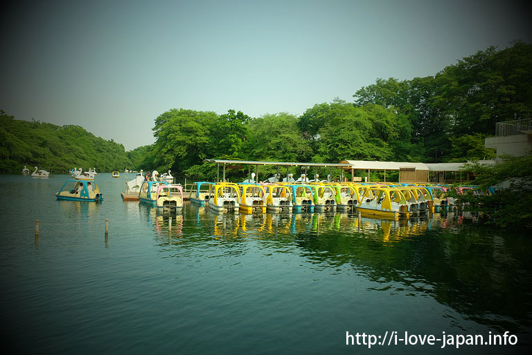 boat@What to do in kichijoji(Musashino-shi,Tokyo)