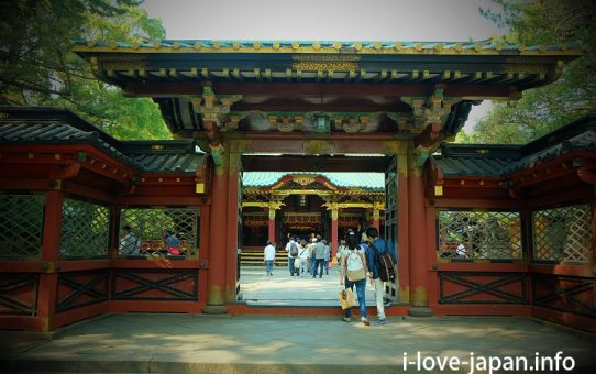 Nezu shrine with  many red toriis!Azalea's season is recommended (Bunkyo-ku, Tokyo)