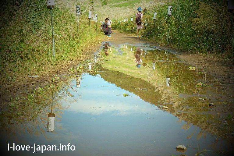 """Silver grass"" in Sengokugahara"