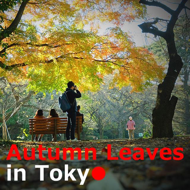 Autumn Leaves【11Spots】in Tokyo