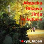 Akasaka Hikawa Jinja Shrine in Autumn(Minato-ku,Tokyo)