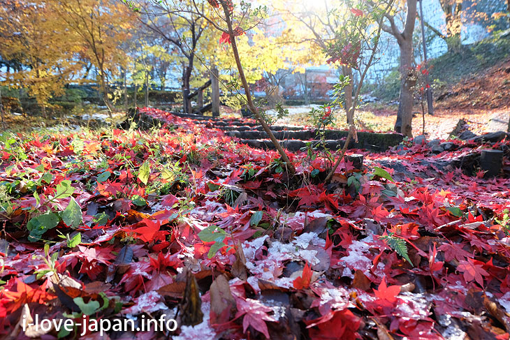 Autumn leaves hiking in Mitake Valley (Ome-shi, Tokyo)