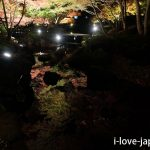 20 minutes from Shinjuku! Autumn leaves light up at Otaguro Park (Suginami-ku, Tokyo)