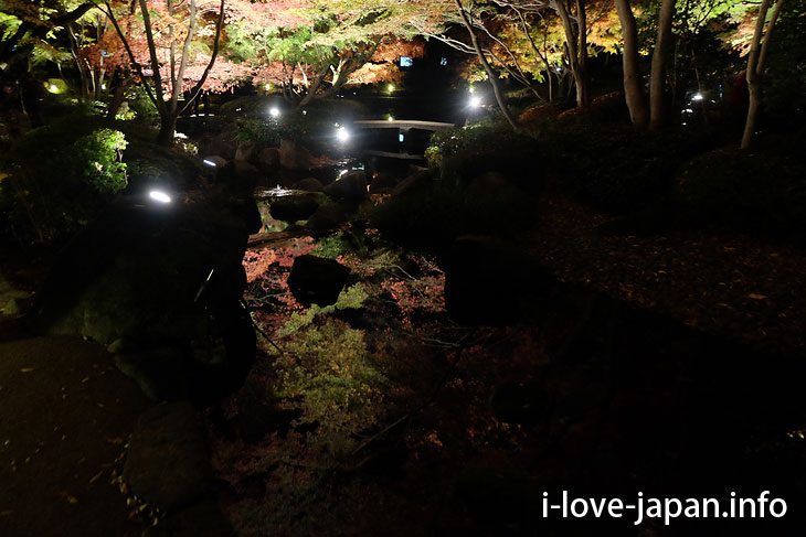 20 minutes from Shinjuku! Autumn leaves light up at Otaguro Park (Suginami-ku, Tokyo)