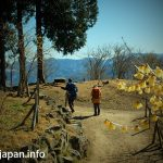 Nagatoro Hodosan Wintersweet Garden