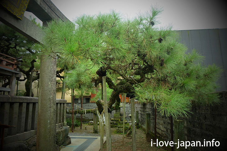 Pine tree like clouds of Kuma Yasaka Shrine