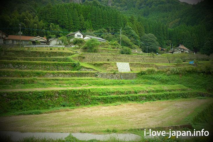 Hadaka Rice Terrace