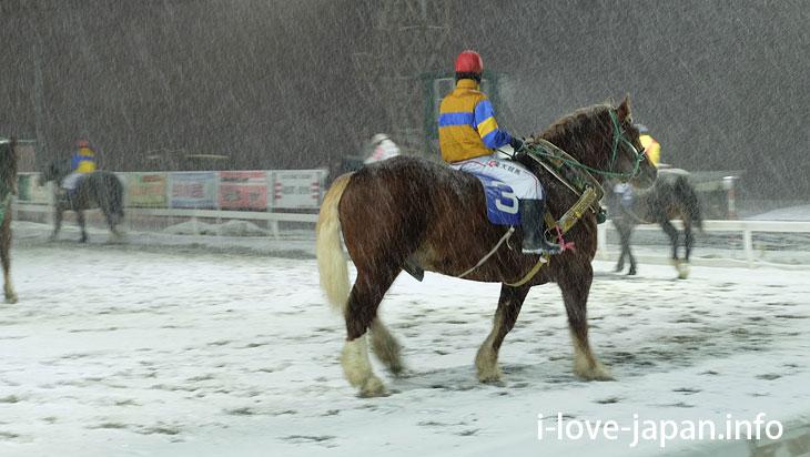 Ban-ei Tokachi(Banei Horse Racing)