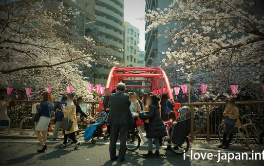 Viewing cherry blossoms along the Meguro River! Recommended course【From Ikejiri Ohashi Station to Nakameguro Station】