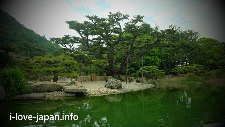 Neagari Goyo-matsu/Five-needle Pine with Raised Roots@Ritsurin Garden (Takamatsu, Kagawa)