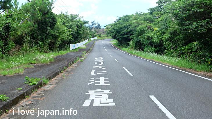 Amami Tokunoshima Limited! Attention to black rabbits@Tokuno-shima Island Tourism(Amami/Kagoshima)