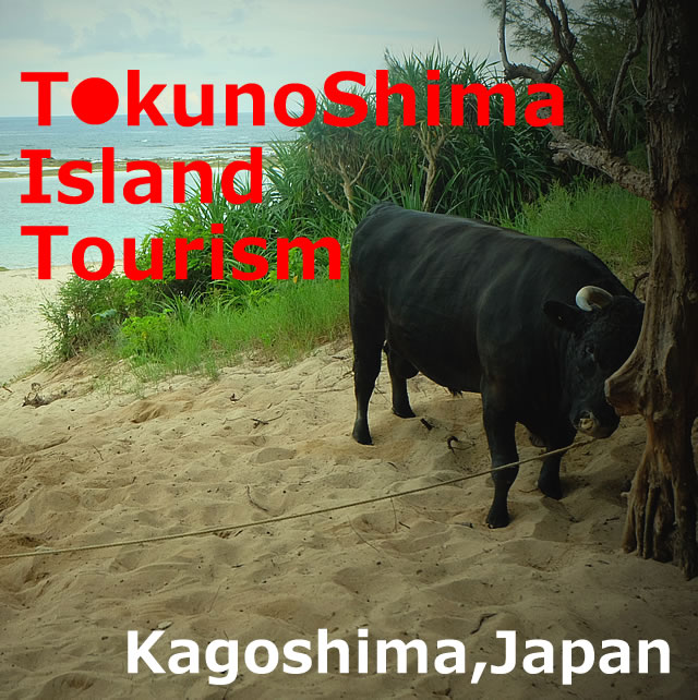 TokunoShima Island Tourism(Amami/Kagoshima)