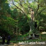 "Takeko Shinto shrine+huge camphor tree ""Ohkusu""(Takeo,Saga)"