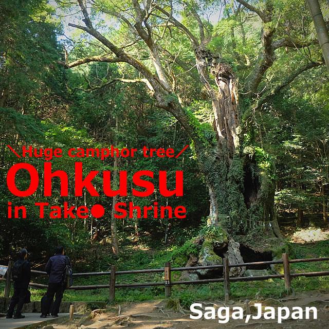 "Takeo Shinto shrine+huge camphor tree ""Ohkusu""(Takeo,Saga)"