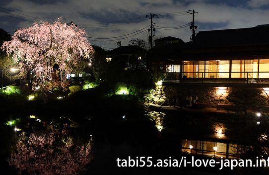 Sakura(Cherry Blossoms) near Ikebukuro Station(30 minutes or less),Tokyo