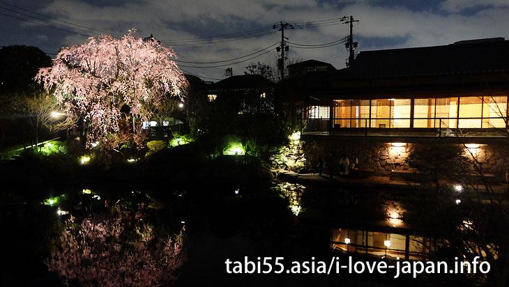 Sakura near Ikebukuro