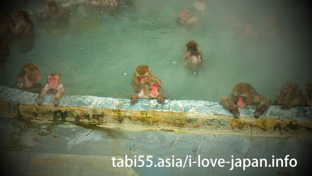 Visit a monkey's hot spring bathing at the Hakodate City Tropical Botanic Garden