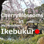 Cherry Blossoms(sakura) in Ikebukuro【 11 selections】
